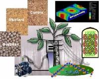 biodiesel_inputs.jpg