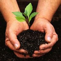 gardening hands.jpg