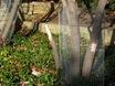 Spring Creek beaver damage