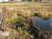 Spring Creek beaver dam