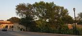 Trees at Riverside Park and 5th St. Bridge