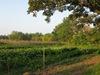 Carleton Student Organic Farm