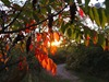 Sumac sunset in the Upper Arb