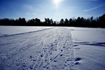 Cross country ski trails in the Upper Carleton Arb