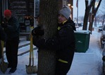 Unidentified tree hugger