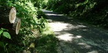 trees and branches down on the Blufflands State Trail