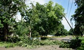 downed tree and power line
