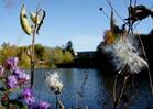 Fall colors near Lyman Lakes, Carleton College