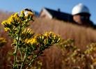 honeybee, Goodsell Observatory, Carleton College