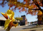 Fall colors on Northfield's Bridge Square