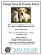 Spay and Neuter flier - English