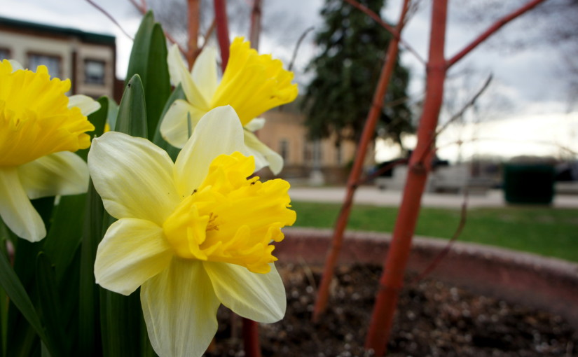Bridge Square is in early bloom, courtesy of its adoption by the Northfield Garden Club