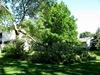 storm damage to trees on Highland Ave