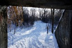Cross country ski trails in the Lower Carleton Arb
