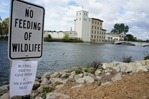 'No feeding of wildlife' sign on Cannon River in Northfield