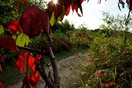 fall colors in the Carleton Arb