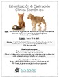 Spay and Neuter flier - Spanish