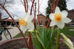 Northfield Bridge Square flowers