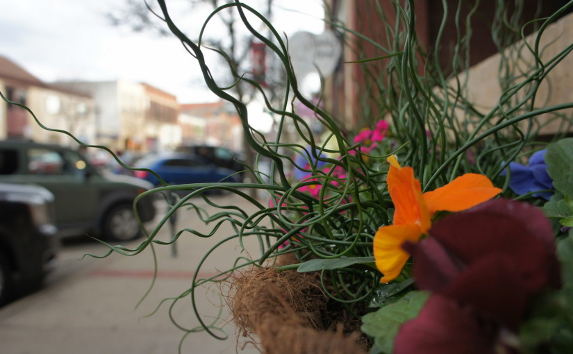 Flower pots are sprouting on Division St., Part 1