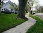 Sidewalk around tree